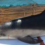 delfin-antofagasta-e1551360729615-750×400